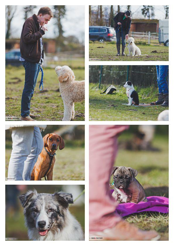 AMS Welpen und Junghundetraining