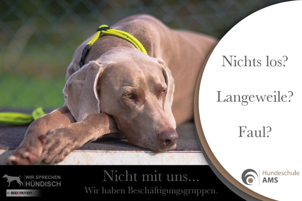 AMS Hundeschule mit System