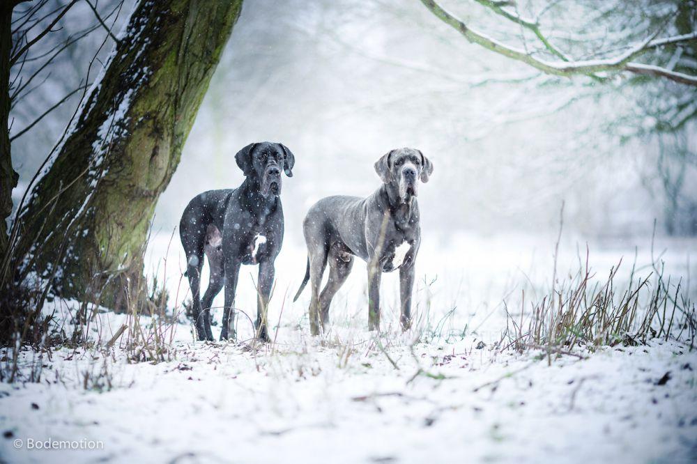 Ben und Buddy - Schneefotografie